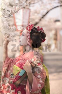 Maiko in kimono posing in profile admiring cherry blossoms at sunset.