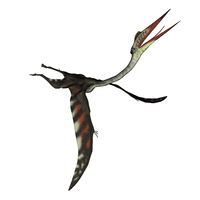 Quetzalcoatlus flying head up - 3D render