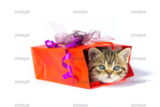 Kitten hides in red gift box on white background