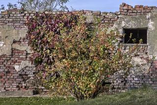 Die Reste eines alten Hauses