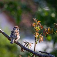Sparrow on a branch in the garden