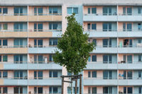 Single tree in front of a facade of an apartment building