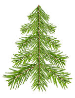 Fir tree from fir branches before white