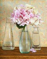 Hortensia flower in glass vase