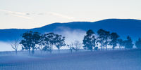 Winter Vines in Yarra Valley Australia