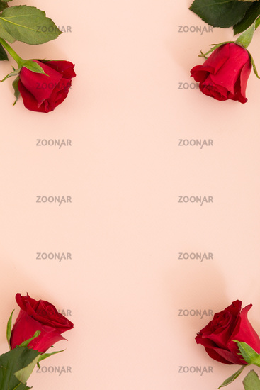 Red petal at the top on pink background with space below