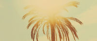 Tropical palm tree leaves in hot summer day as vintage background, nature and travel