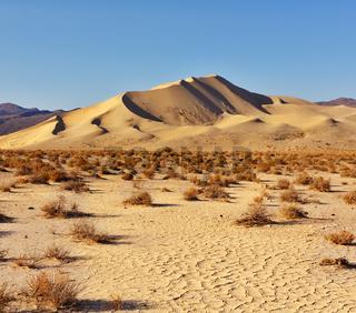 Magnificent greater sandy dune Eureka