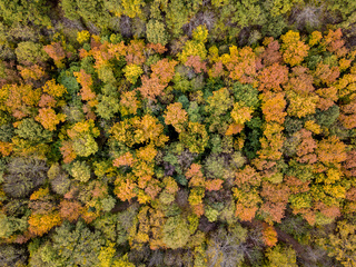 Aerial view from a drone above the forest with trees in autumn colors.