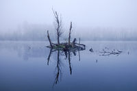 Tree stump island in the water, November fog, Bislicher Insel nature reserve, Xanten, Germany