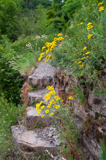 Hiking trail with wild flowers