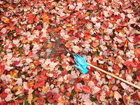Autumn  leaves with fan rake and gloves on lawn