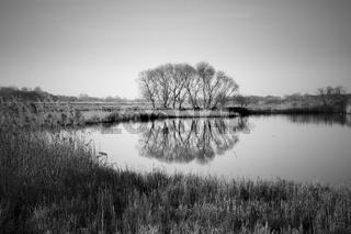 Gewaesser mit spiegelndem Baum