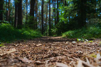 Selective focus on forest floor with blurred sunny path through evergreen forest, Austria