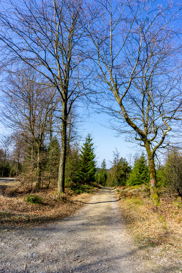 On the hiking route Rothaarsteig in the Sauerland in Germany