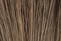 halms of reeds