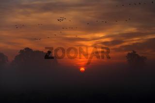 Vogelzug über Brandenburg bei Sonnenaufgang