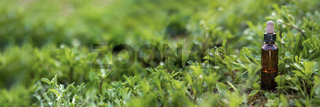 Natural cosmetic oil bottle on macro green plant.