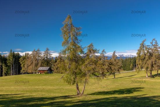 Late summer on Salten mountain, South Tyrol