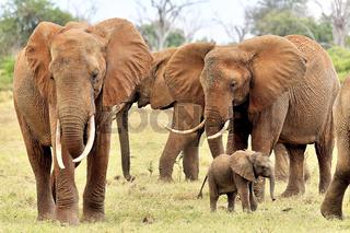 Elefantenbaby spielt bei seiner Familie