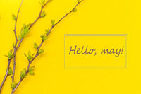 Hello, may May banner with place for text. Layout Branch of a bush. Natural Young green leaves on bloom. New month.