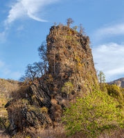 tree on rock landscape Madagascar
