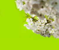 Bright color nature spring design for any purposes