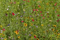 colorful wildflower meadow