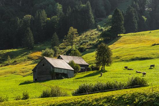 Pastureland and alpine huts in the Swiss Alps, Toggenburg, Canton St. Gallen, Switzerland
