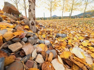Stony pile in paddock with level of yellow lime leaves