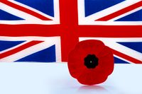 A remembrance day poppy flower with a UK Flag on the background.
