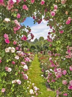 Rosenbogen mit roten Rosen