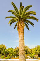 Single palm tree facing a beautiful blue sky on the island of Crete