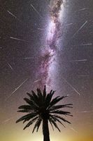 Purple Milky way falling stars palm tree