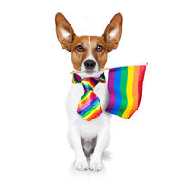 gay pride dog  with rainbow flag