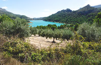 Olive tree plantation at the dam reserevoir lake surrounded by green forest at Guadalest, Spain