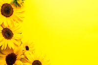 Sunflowers On Yellow Paper Background