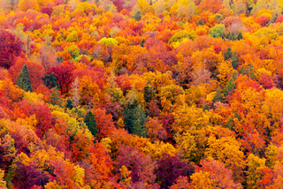 Full frame of beautiful variegated autumn foliage of mixed forest in late October