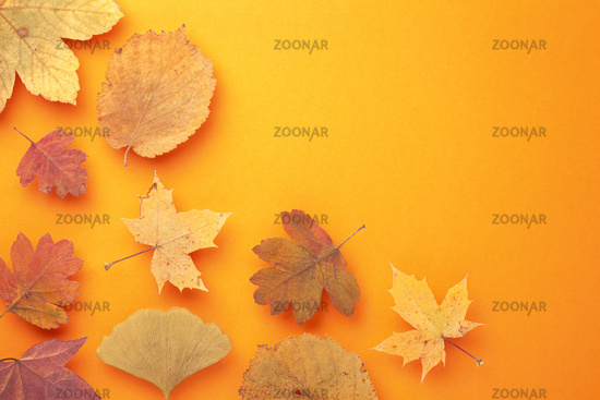 Colored Autumn Leaves On Orange Background
