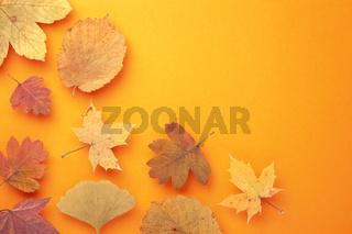 Colored Autumn Leaves On Orange Background