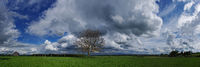 Cloud formations with tree