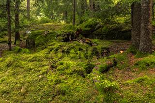 Wald in der Naehe von Hafling bei Meran, Suedtirol