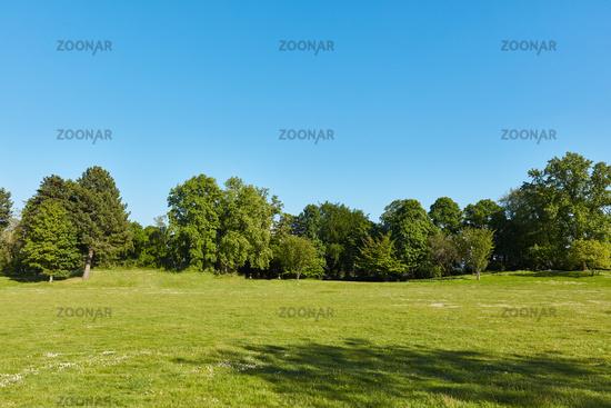 Grüne Wiese im Park mit Bäumen vor einem blauen Himmel