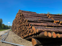 Storage of fresh tree logs