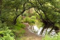 The Leubeek brook