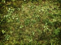 Green Grass Lawn Background Texture Wallpaper