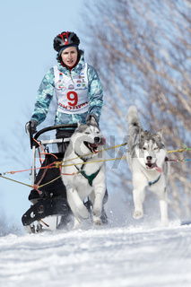 Kamchatka Kids Sled Dog Race Dyulin Beringia