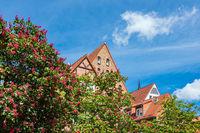 Historische Gebäude und blühende Bäume in der Hansestadt Rostock