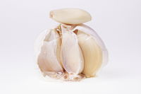 Opened white garlic tuber, cloves with peel, isolated on white background. Food, health concept