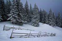 Winter in a Carpathian village, Ukraine
